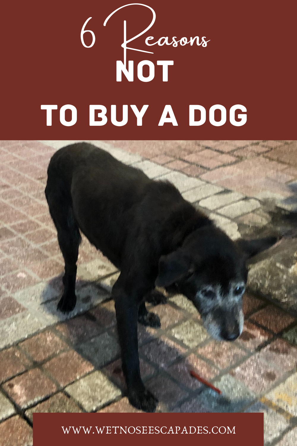 Why You Should Not Buy A Dog From A Breeder In 2020 Buy A Dog Dog Breeds That Dont Shed Dogs