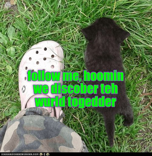 Pin By Texas Jamboree2 On Cats Kittens Dogs Puppies Cute Baby Cats Silly Animals Baby Cats