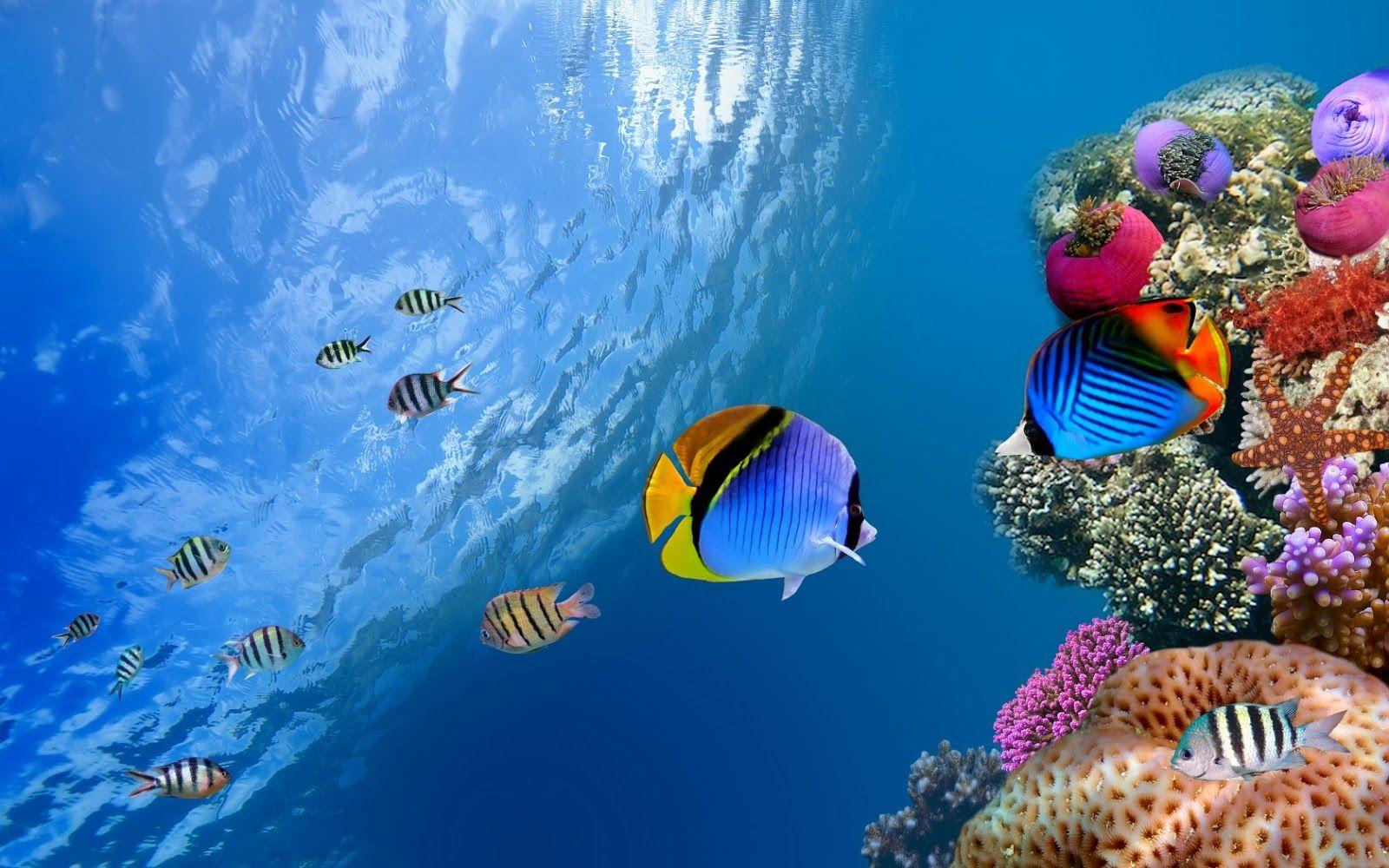 Imagenes De Peces De Colores En El Fondo De Arrecifes De Coral Peces Tropicales Fondo De Pantalla De Peces Arrecifes De Coral