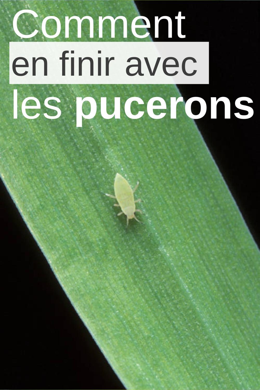 Insecticide Naturel Pour Les Plantes Insecticide Naturel Plante Trucs Et Astuces Jardinage