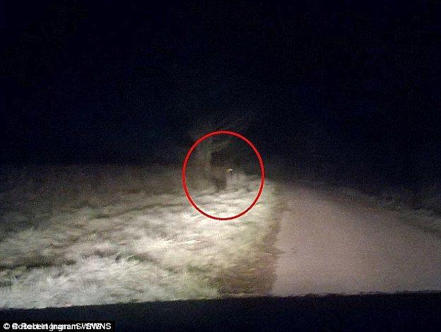 Werewolf sightings in england