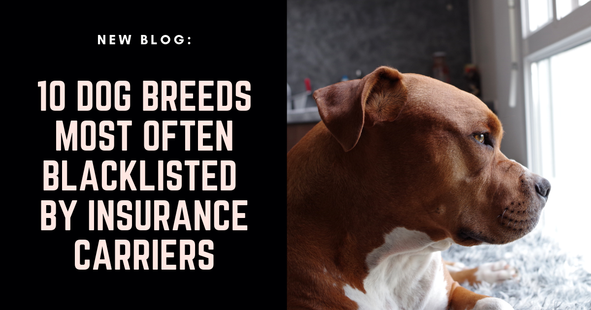 The Breed Of Dog You Own Could Make It More Difficult To Secure