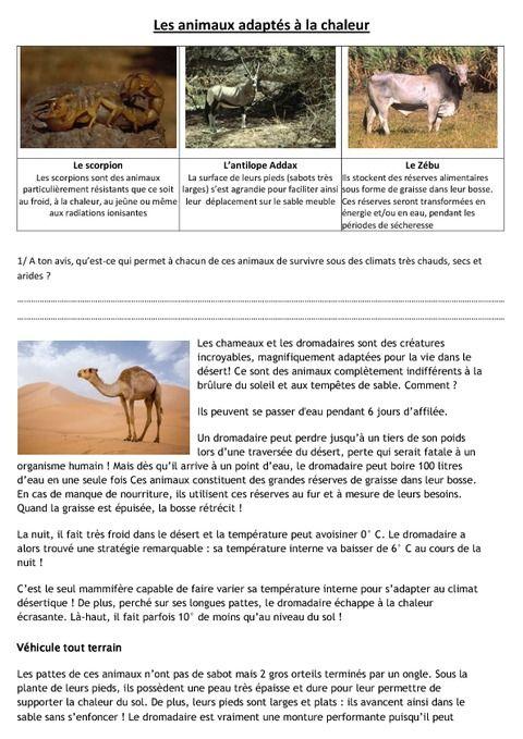Les Animaux Et Leur Milieu Cm2 Exercice Cm1 Exercice La Chaleur