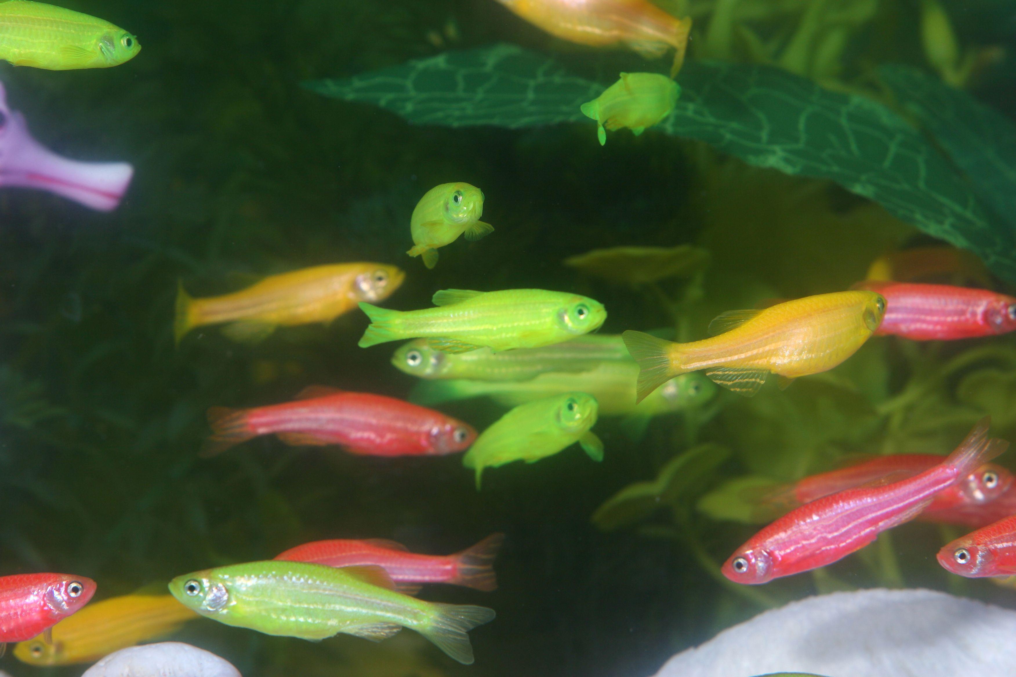 I want glow in the dark fish. :)