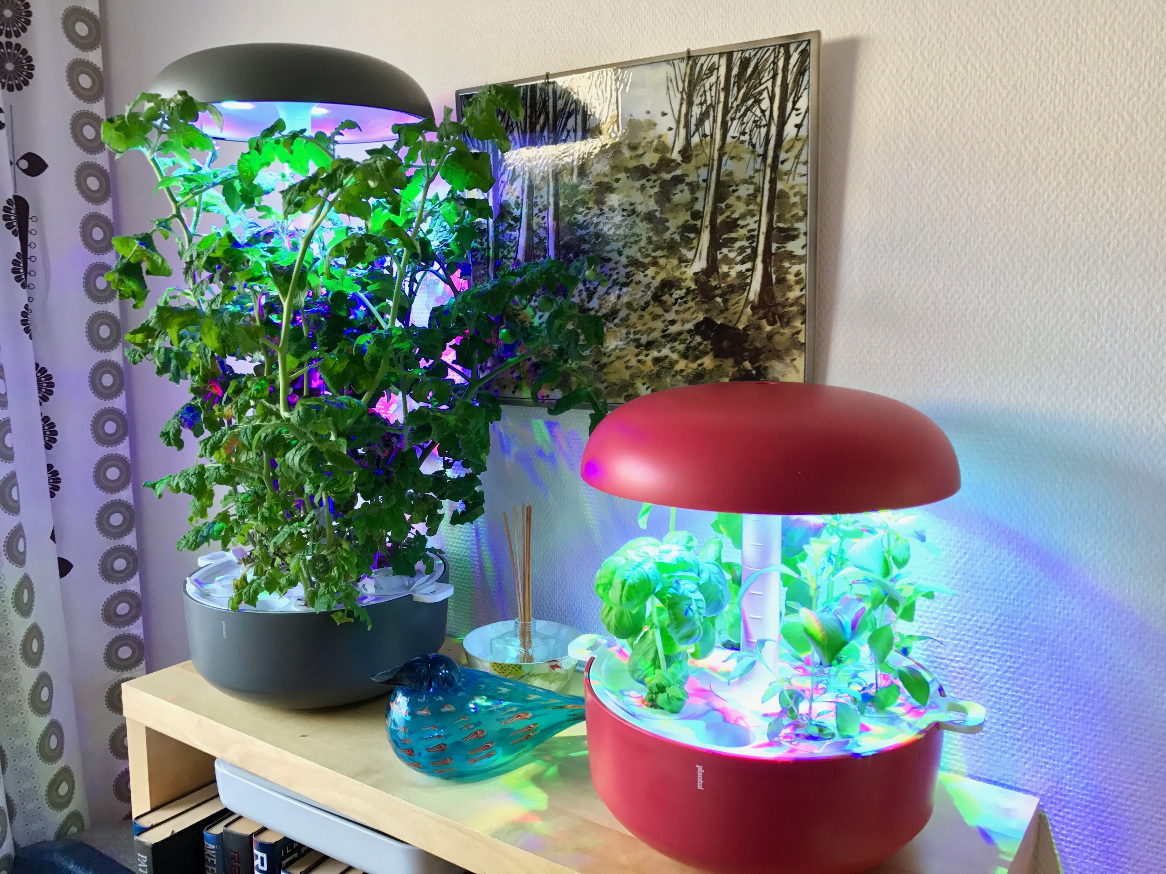 Plantui Smart Garden with light height blocks growing Singaporean tomatoes and Lemon Basil at home