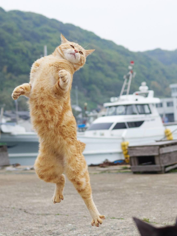 Karate Cats Photographer Hiroyuki Hisakata Captures Felines In Martial Arts Poses Culture Jumping Cat Ninja Cats Cat Photography