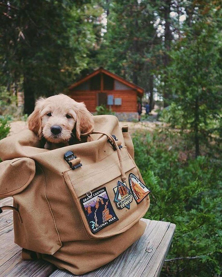 Photo of Les deseamos una feliz semana. 🐶🏕 #perro #camping #camp #perros #cachorros #pu …
