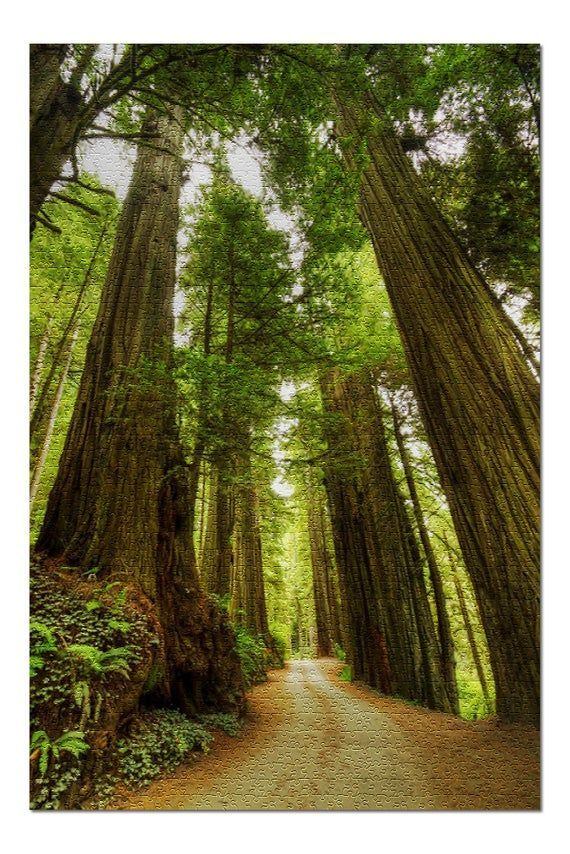 Redwood Forest Road Photography A-91535 (20x30 Premium 1000 Piece Jigsaw Puzzle, Made in USA!)#20x30 #a91535 #forest #jigsaw #photography #piece #premium #puzzle #redwood #road #usa