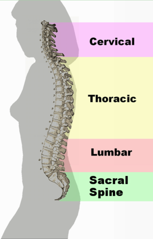 English: Fix the labeling from pelvic to sacra...