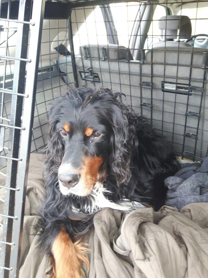 Här är hund kojan i bilen