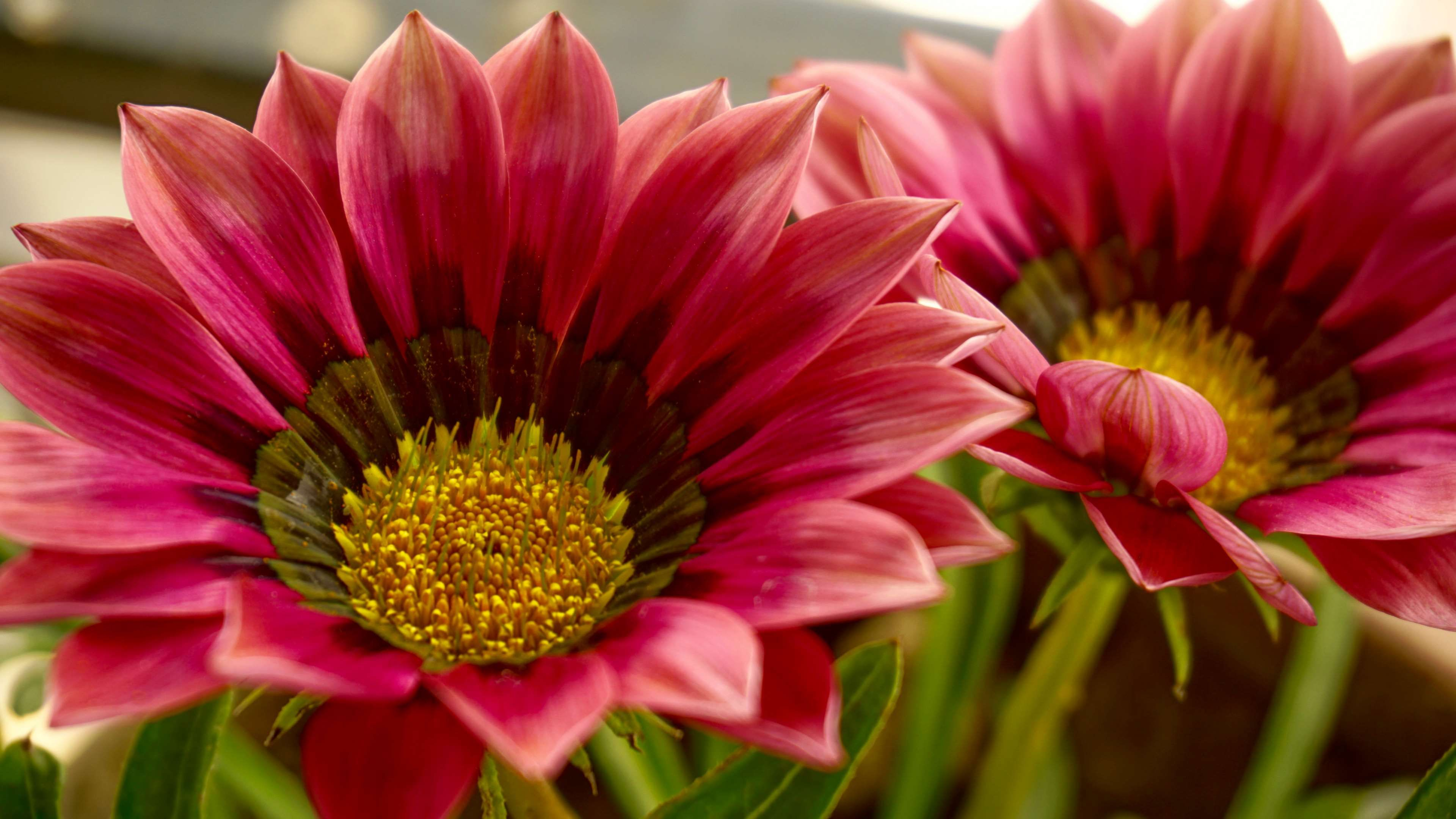 Beautiful beautiful flowers bloom blooming blur close up beautiful beautiful flowers bloom blooming blur close up delicate izmirmasajfo Images