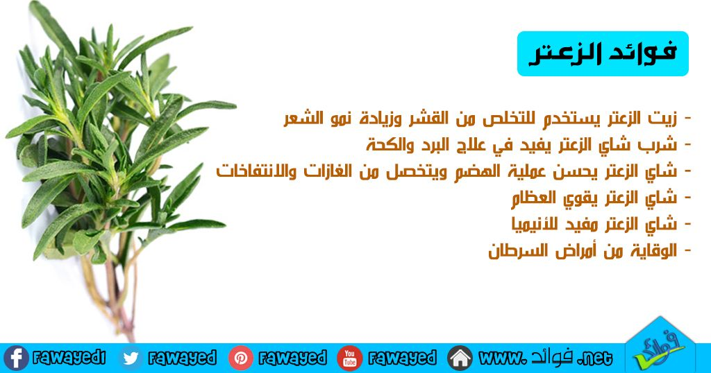 فوائد الزعتر Thyme Tea Health And Nutrition Drinking Tea