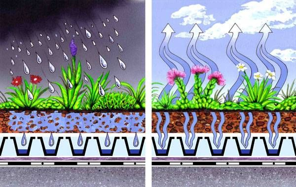 6 Ecological Benefits Of Green Roofs Roof Landscape Green Roof Green Roof Benefits