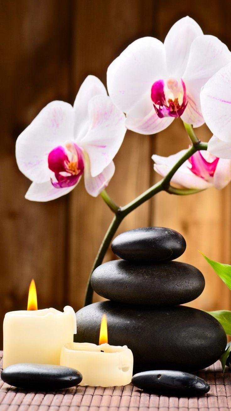 Color your life colette le mason mood board for the bliss life ceo good morning - Salon toilettage zen attitude ...