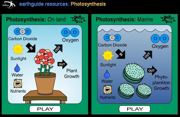 See how photosynthesis works photosintesis on land marine see how photosynthesis works photosintesis on land marine interactive diagram play ccuart Images