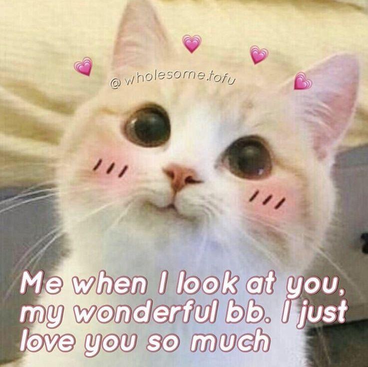 Eu Toda Vez Que Te Vejo Sinto Meu Coracao Quase Pular Pra Fora Um Friozinho Na Barriga E Uns Pensamentos Tipo Meu D Cute Memes Cute Cat Memes Cute Love Memes