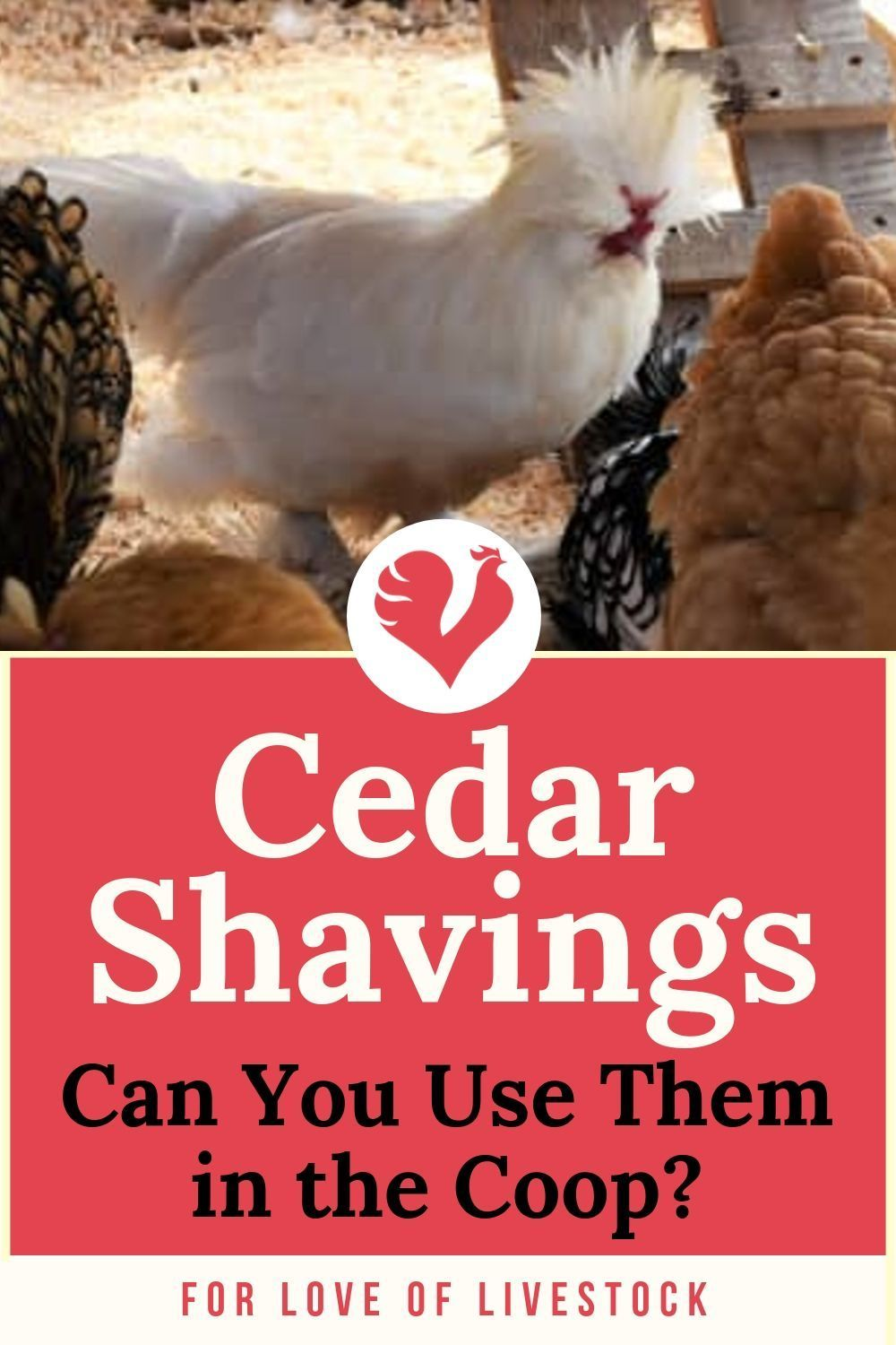 Why You Should NEVER Use Cedar Bedding in Chicken Coops