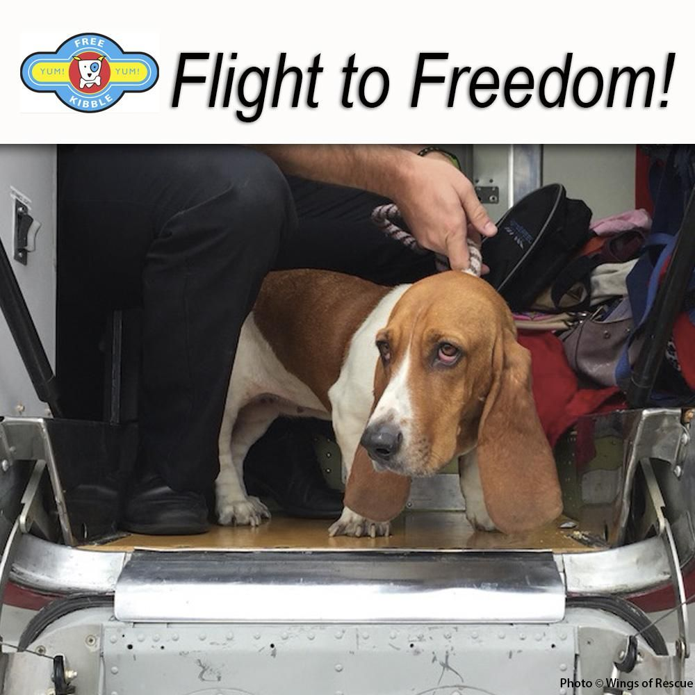 Help Save Animals From Euthanasia By Helping Provide Them With Flights To Fly Them To Shelters Where They Will Be Adopted Animal Rescue Site Pets Save Animals