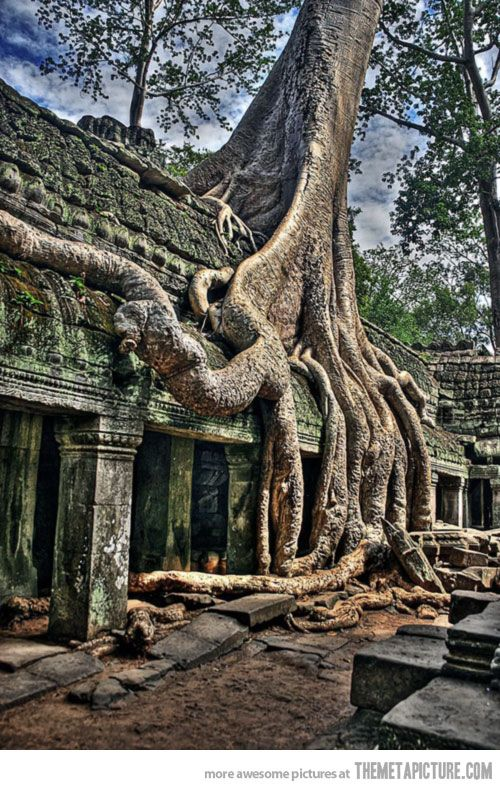 Tree growing on top of a Cambodian temple
