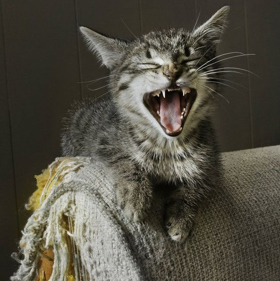 Cat Scratch Fever: 11 of the Best Scratching Posts on the Market