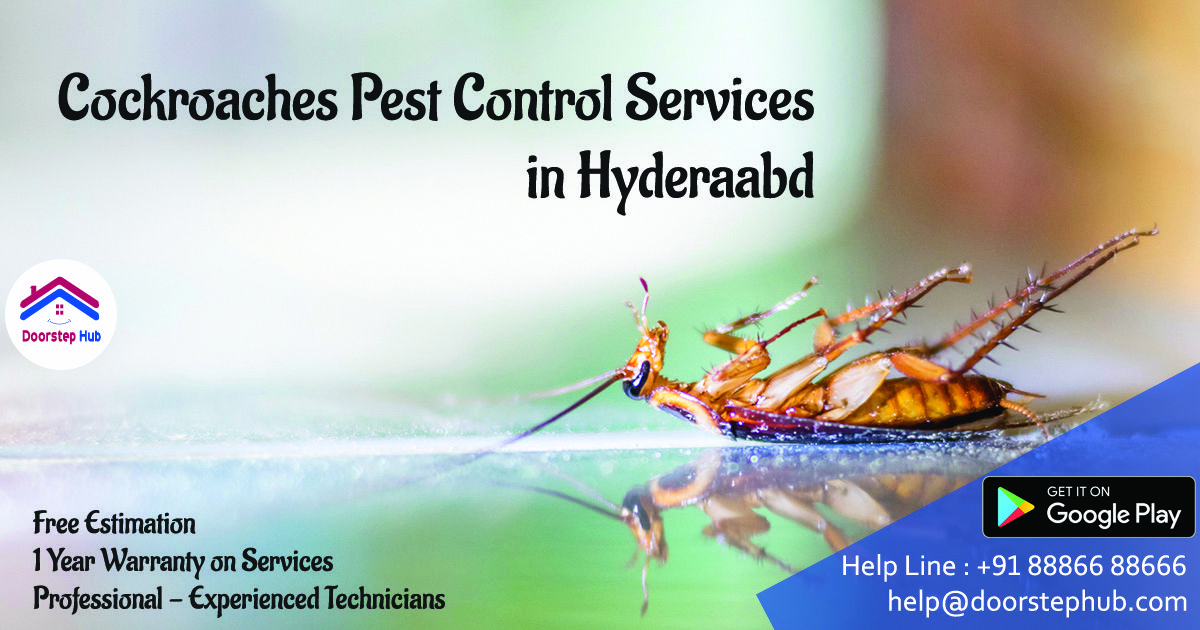 They aim to provide you with 100 effective Pest Control