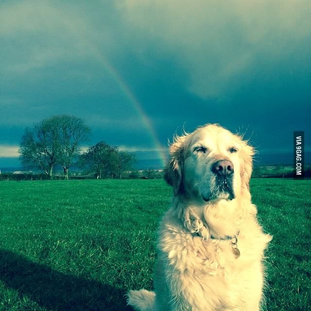 Pot Of Gold At The End Of The Rainbow Cute Animal Pictures