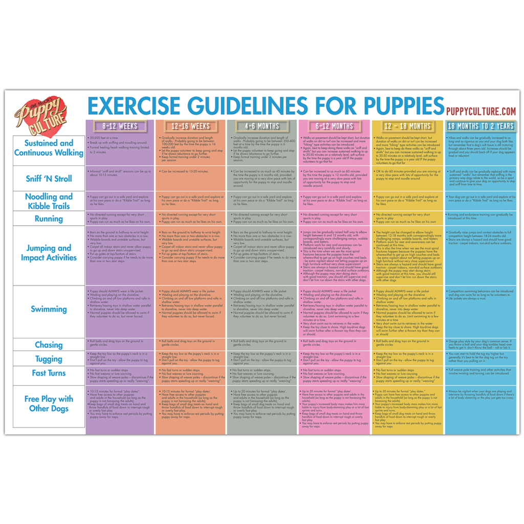 Age appropriate exercise poster Puppy training, Training