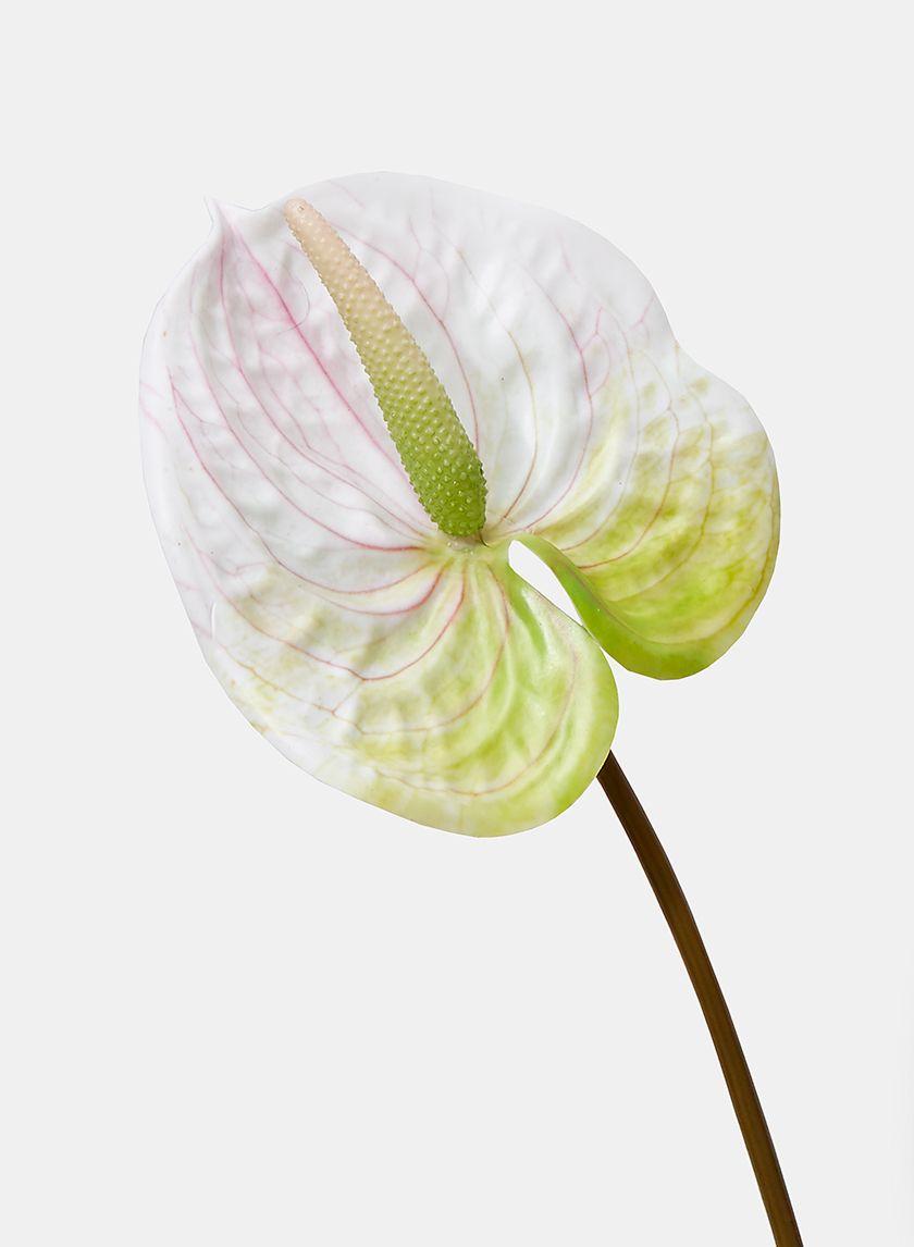 22in White Anthurium Spray Anthurium Flower Anthurium Anthurium Arrangement