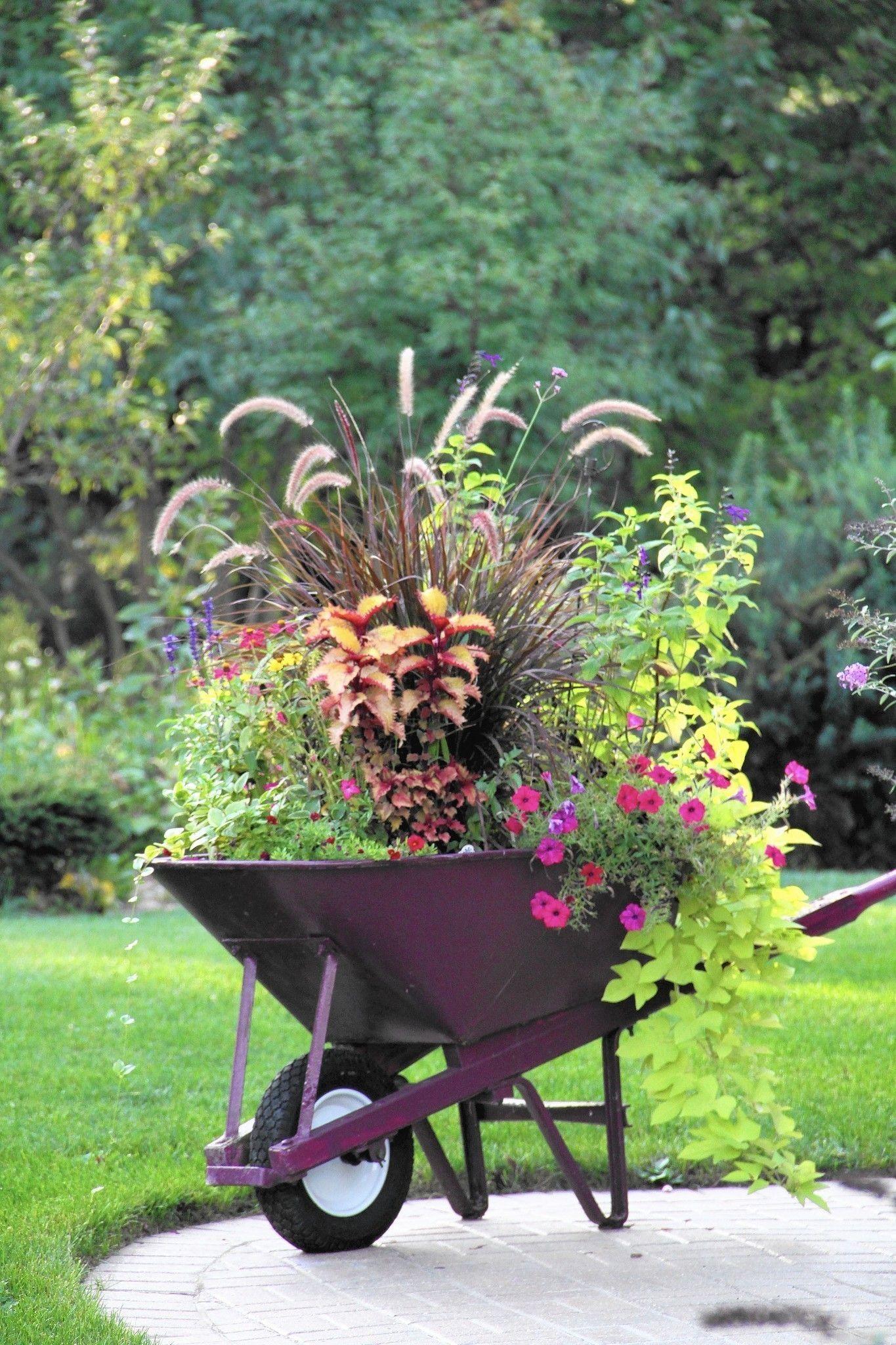 Fix Up Your Fall Container Gardens Wheelbarrow Garden 640 x 480