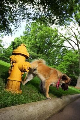 How To Stop Your Dog From Urinating On Concrete Dog Fur