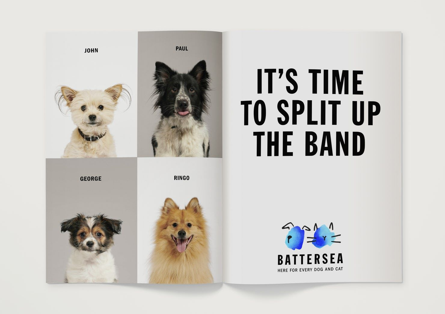 Battersea Brand Strategy Tone Of Voice And Visual Identity For One Of Britain S Oldest And Most Famous With Images Dog Charities Animal Charities Animal Rescue Center