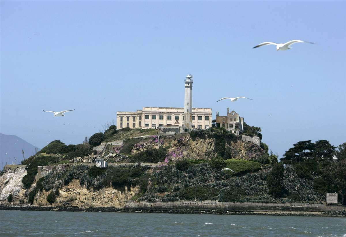 Seagulls Fly Over San Francisco Bay With Alcatraz Island In The