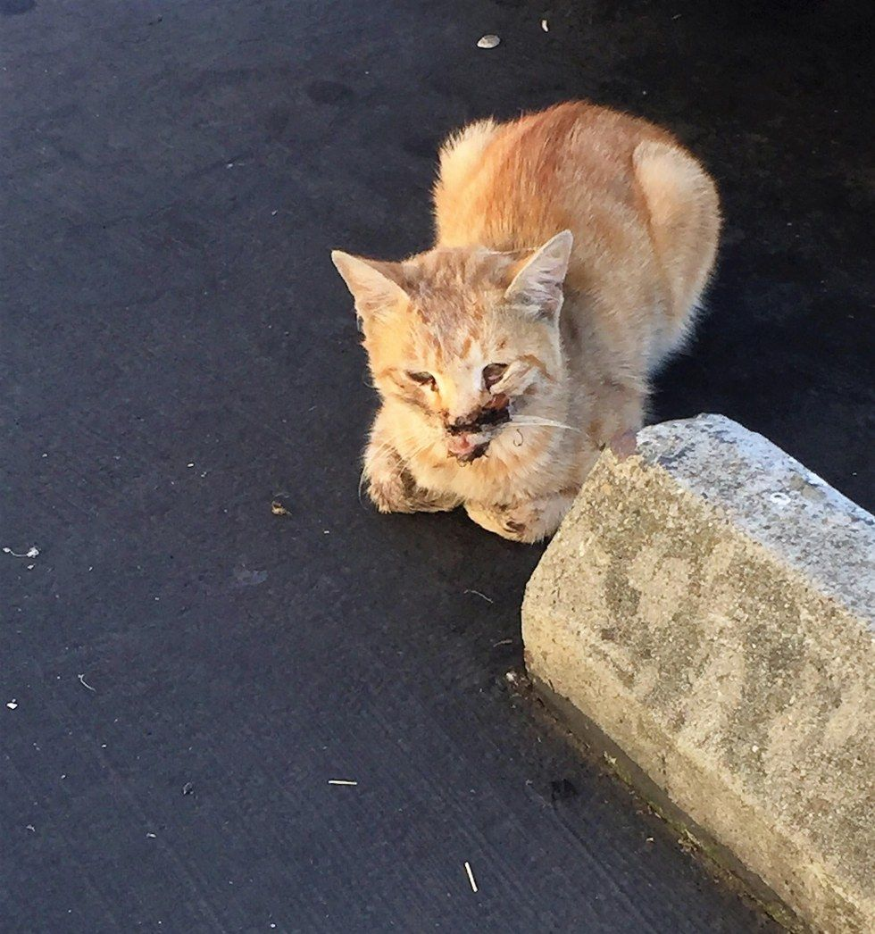 A Woman Began To Care For A Ginger Stray Cat Who Came To Her Work Place One Day Looking For Food She And Her Co Workers Happily Ob Cats Pet Store Ginger