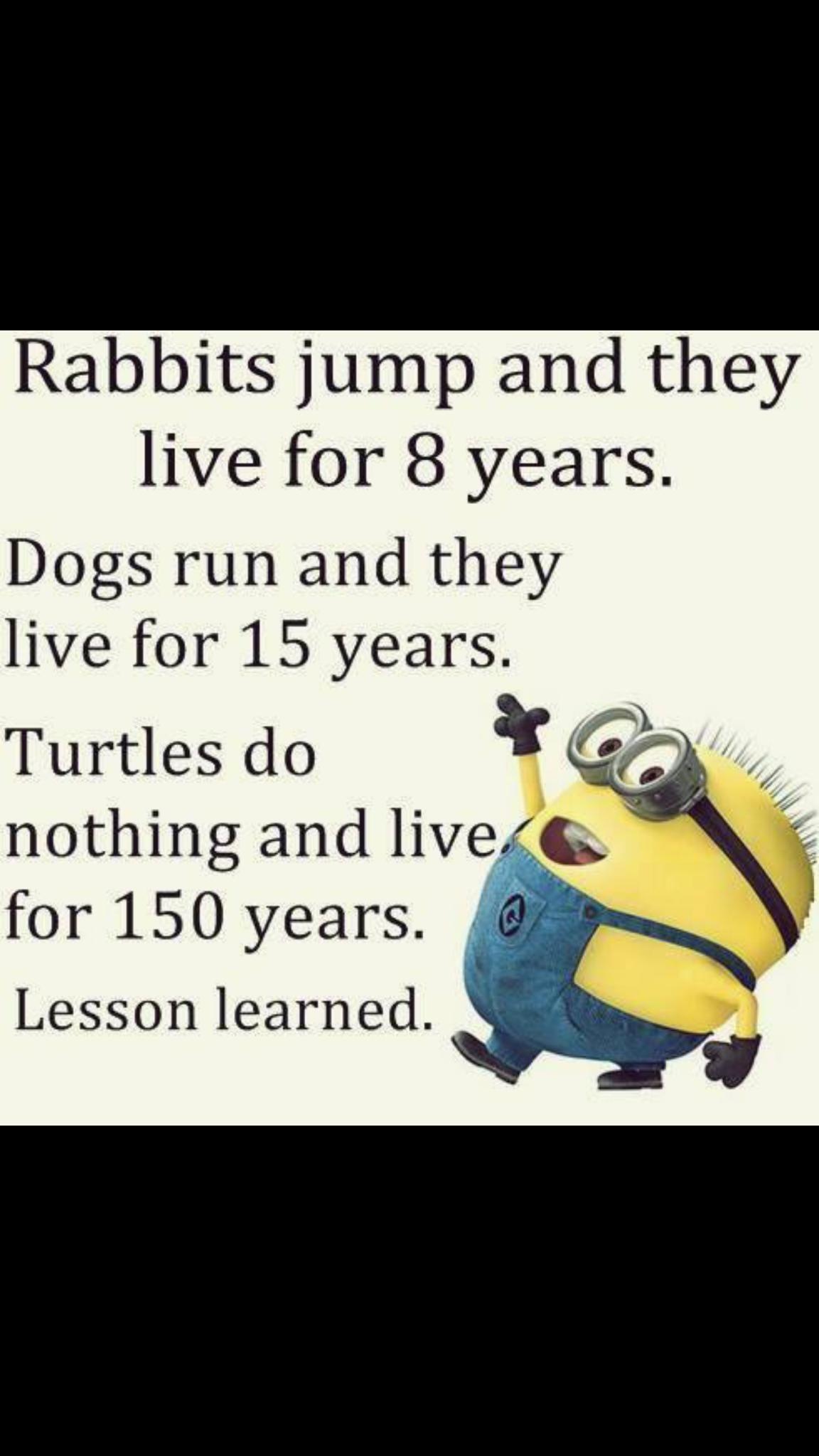 Turtles..... Minions funny, Funny minion quotes, Fun