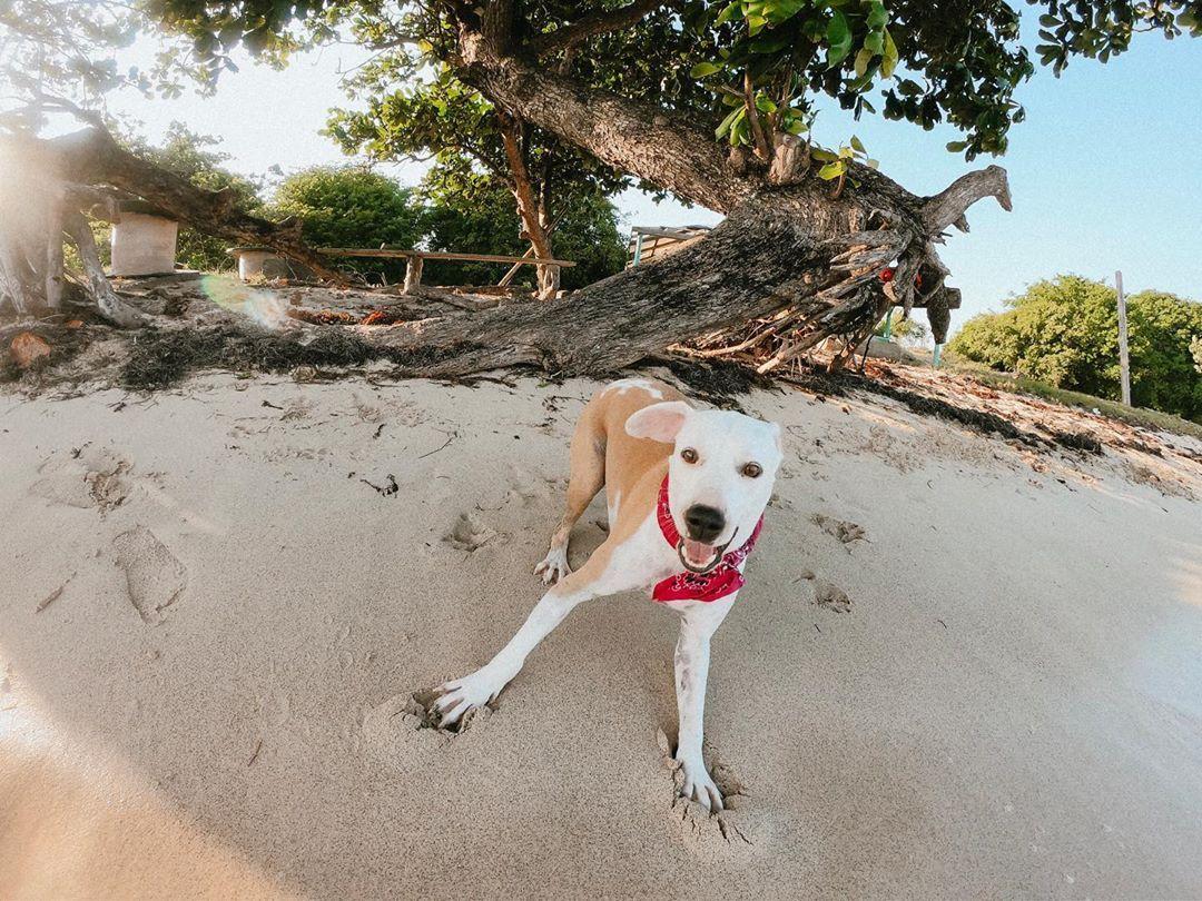 Play W Me Dogtorremy Dogs Dogsofinstagram Beagles