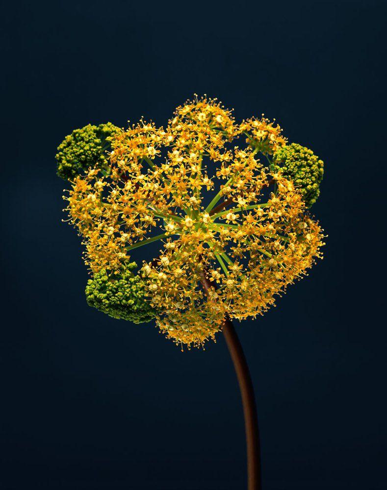 Strangers a stunning photos series by erwan frotin capturing the strangers a stunning photos series by erwan frotin capturing the beauty of flowers izmirmasajfo