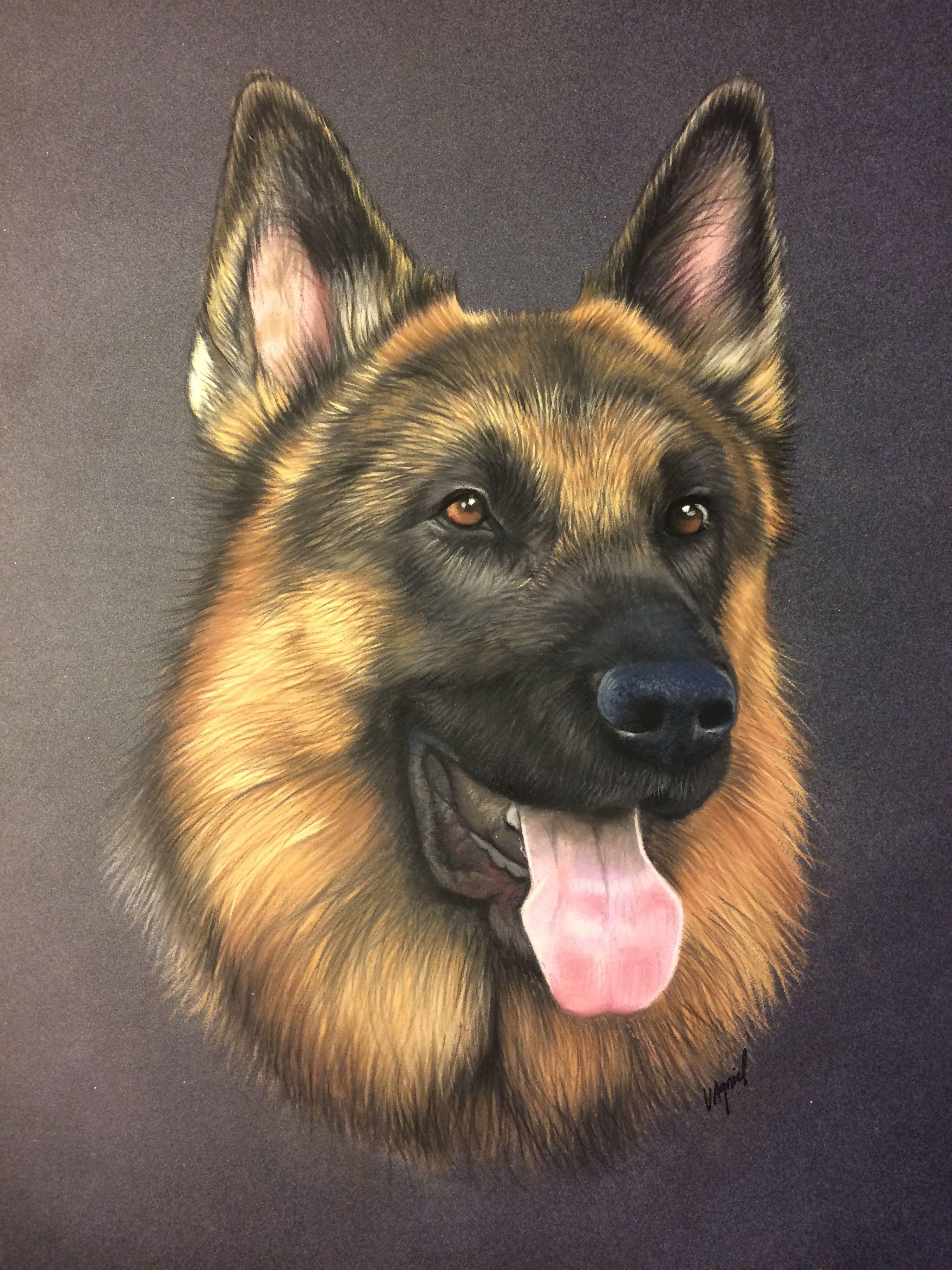 Dessin de berger allemand au pastel portrait animalier - Dessin de chien berger allemand ...
