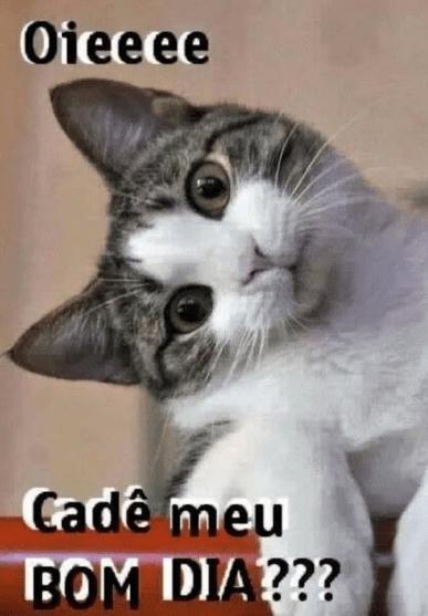 Imagens De Bom Dia Engraçadas Memes Frases Mijarderirtv