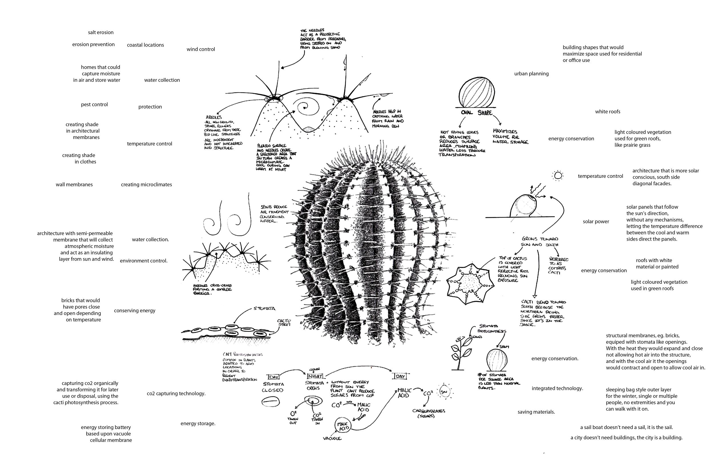 Internal Diagram Of Cactus - Trusted Wiring Diagrams •
