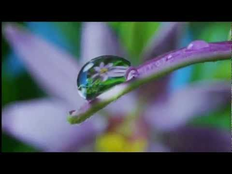 Louis Armstrong song, What a Wonderful World, combined with breathtaking footage from David Attenborough and Louie Schwartzberg - http://bSix12.com/
