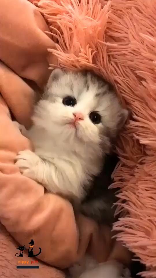 Kawaii Cute kitten.Foldable Deep Sleep Pet Cat Hou