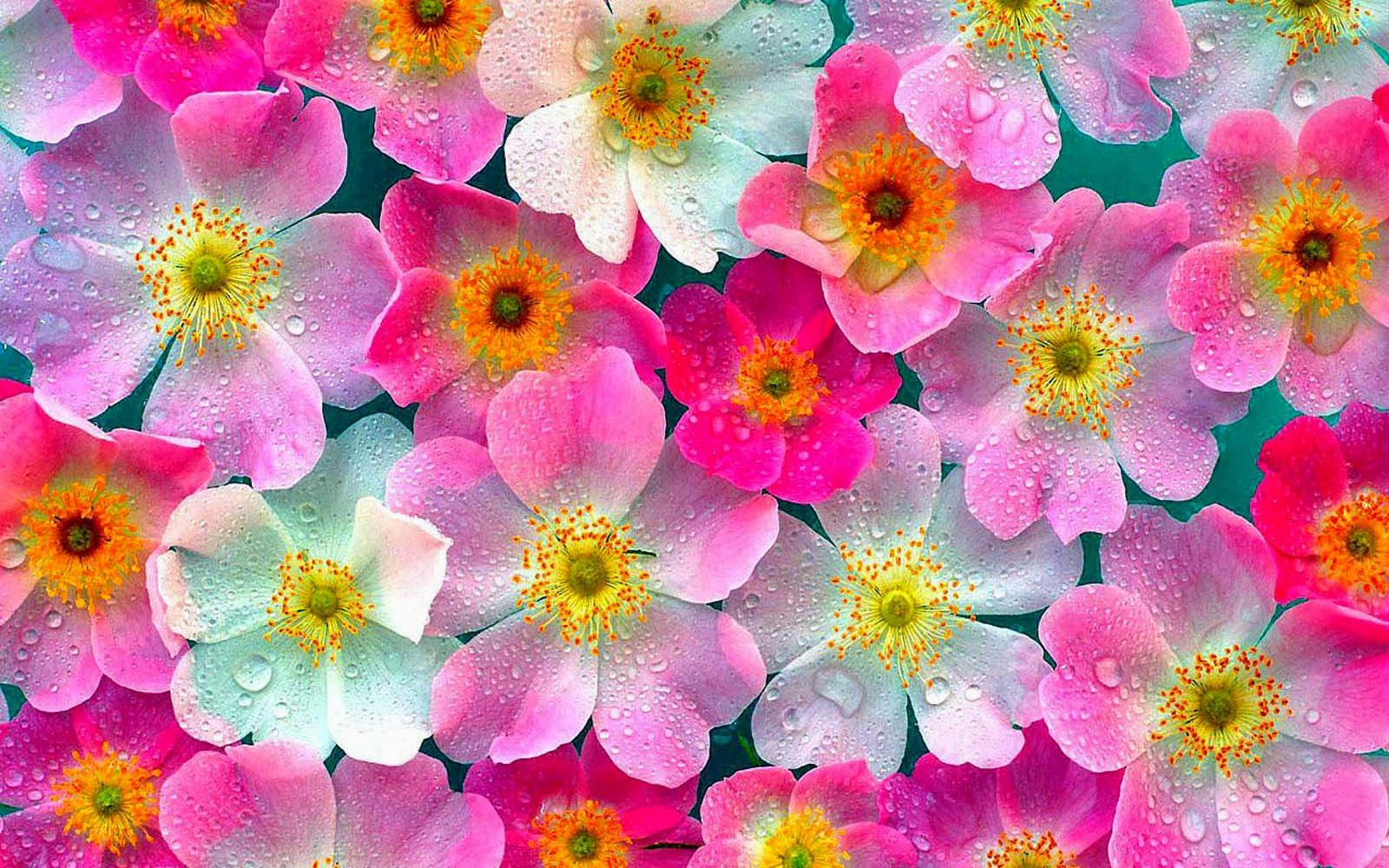 Foto Bunga Cantik Untuk Wallpaper