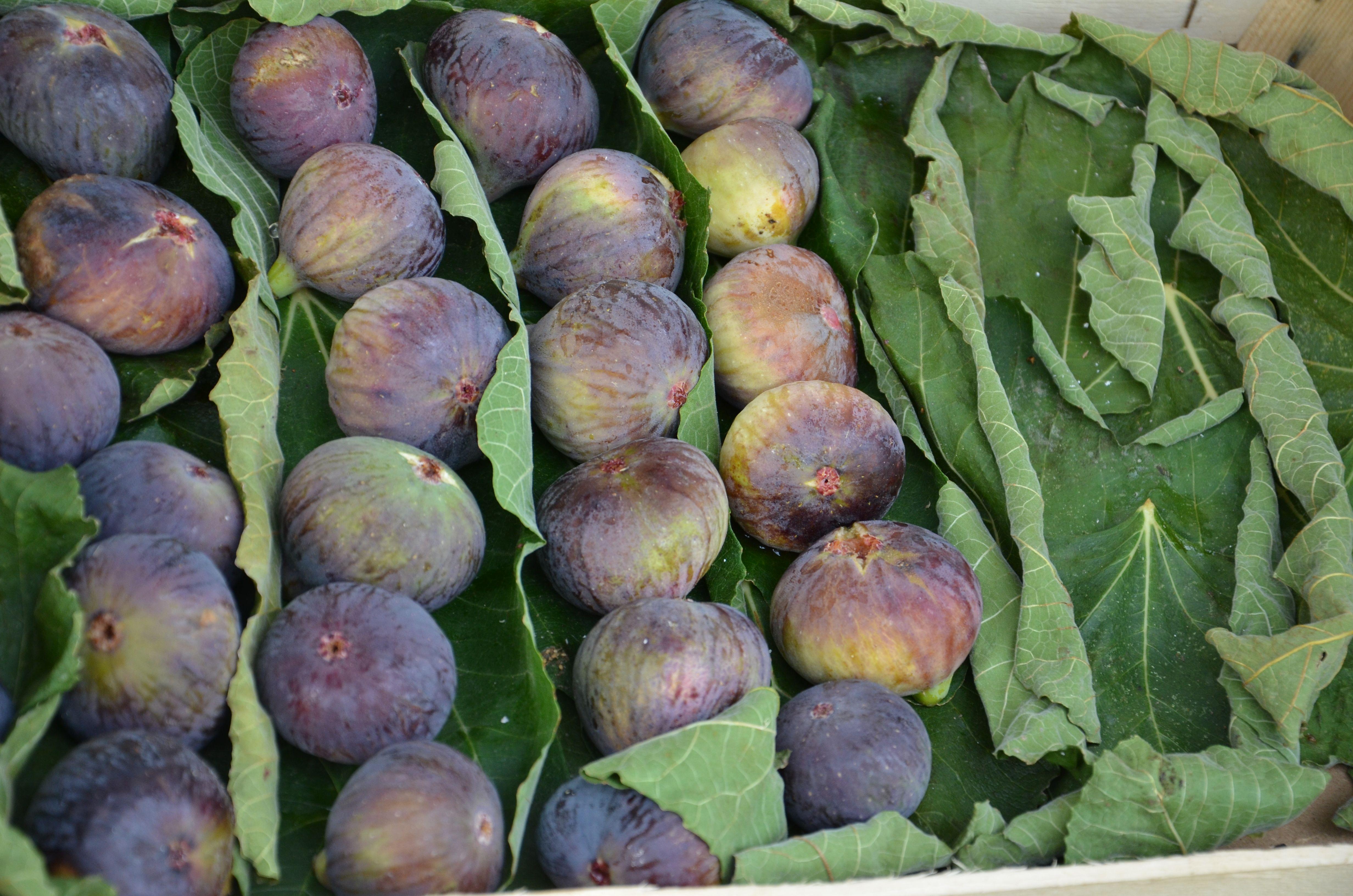 Amalfi Coast figs #amalfi