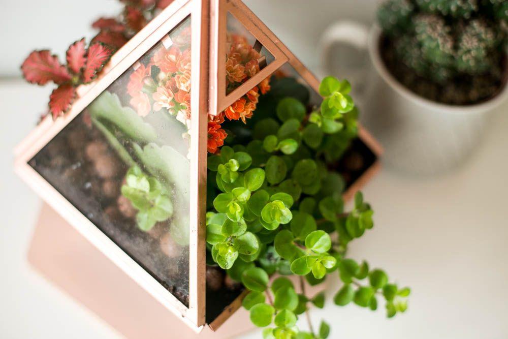 DIY / Mon premier terrarium
