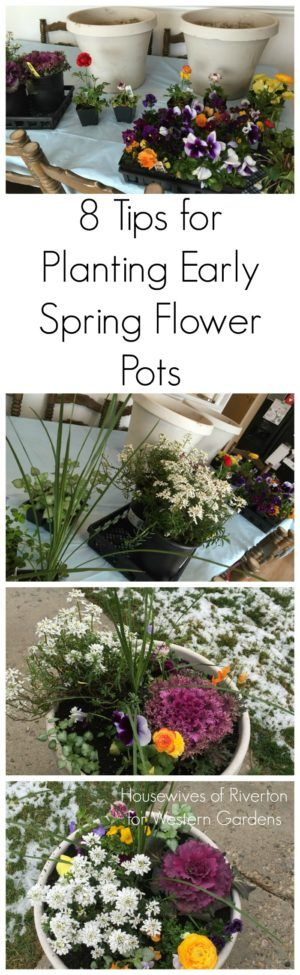 Pinterest & 8 Tips-Planting Early Spring Flower Pots | CGH Lifestyle ...