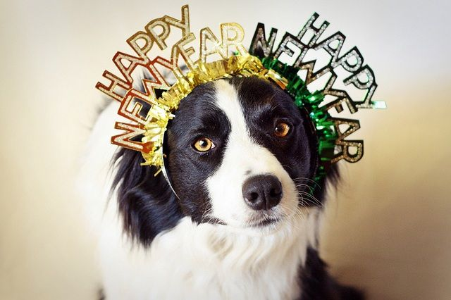 Happy New Year Dog And Cat Pictures