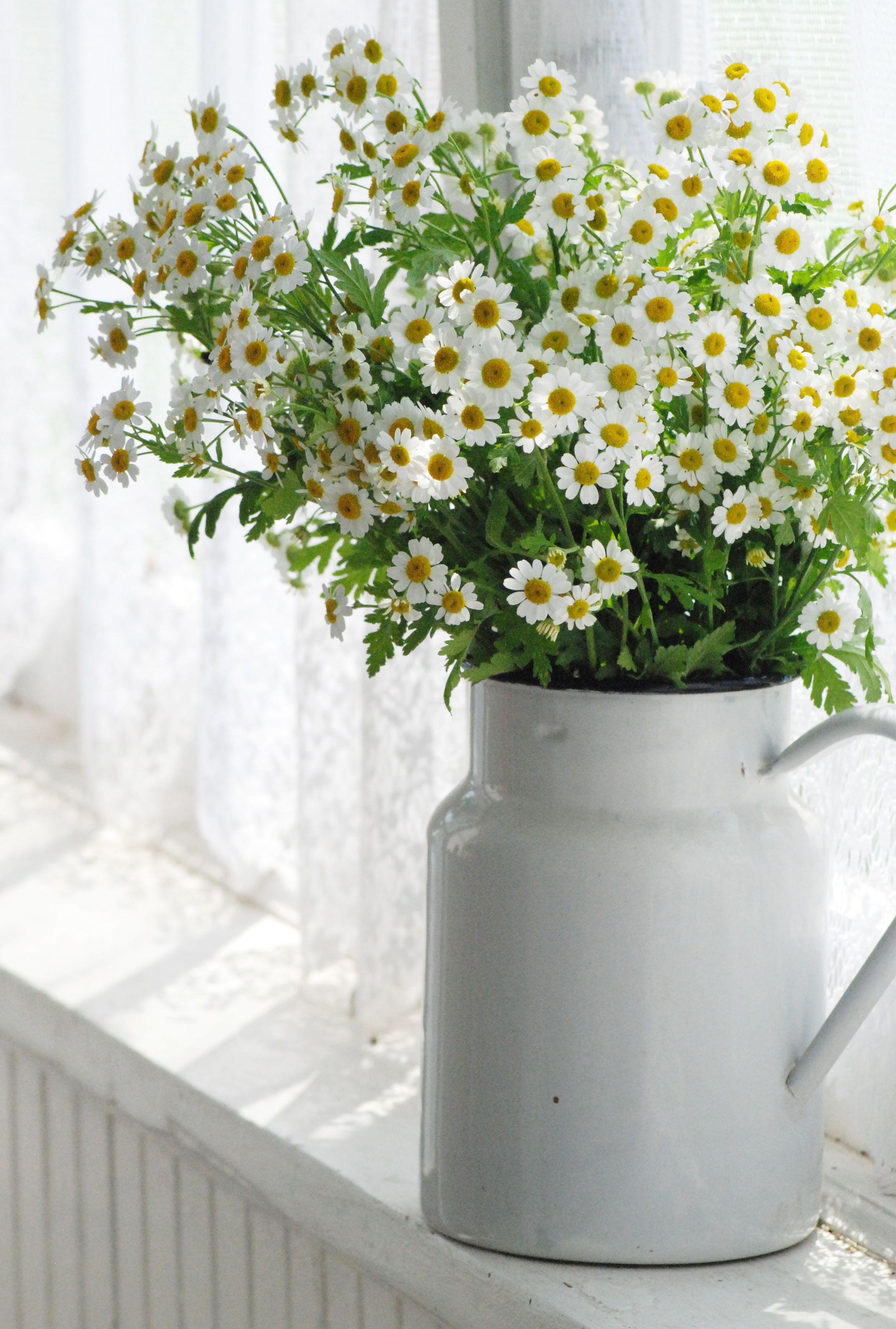 Feverfew From The Farmhouse Wares Garden Daisy With Images Beautiful Flowers Flower Arrangements Pretty Flowers