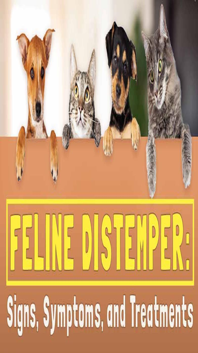 Feline Distemper Panleukopenia (With images) Feline