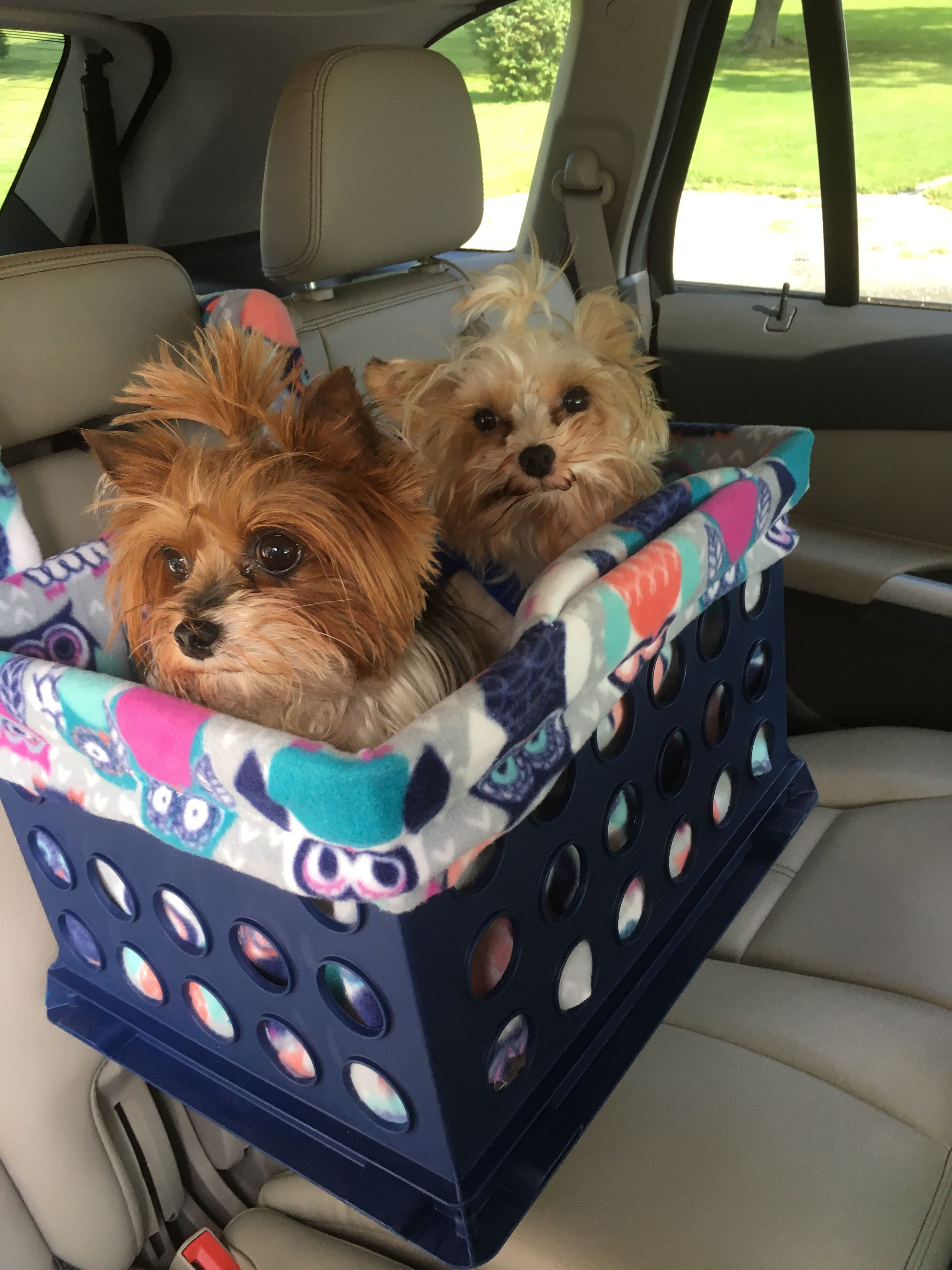I Make Custom Small Dog Car Seats For One Or Two This Is Lacey And Reilly