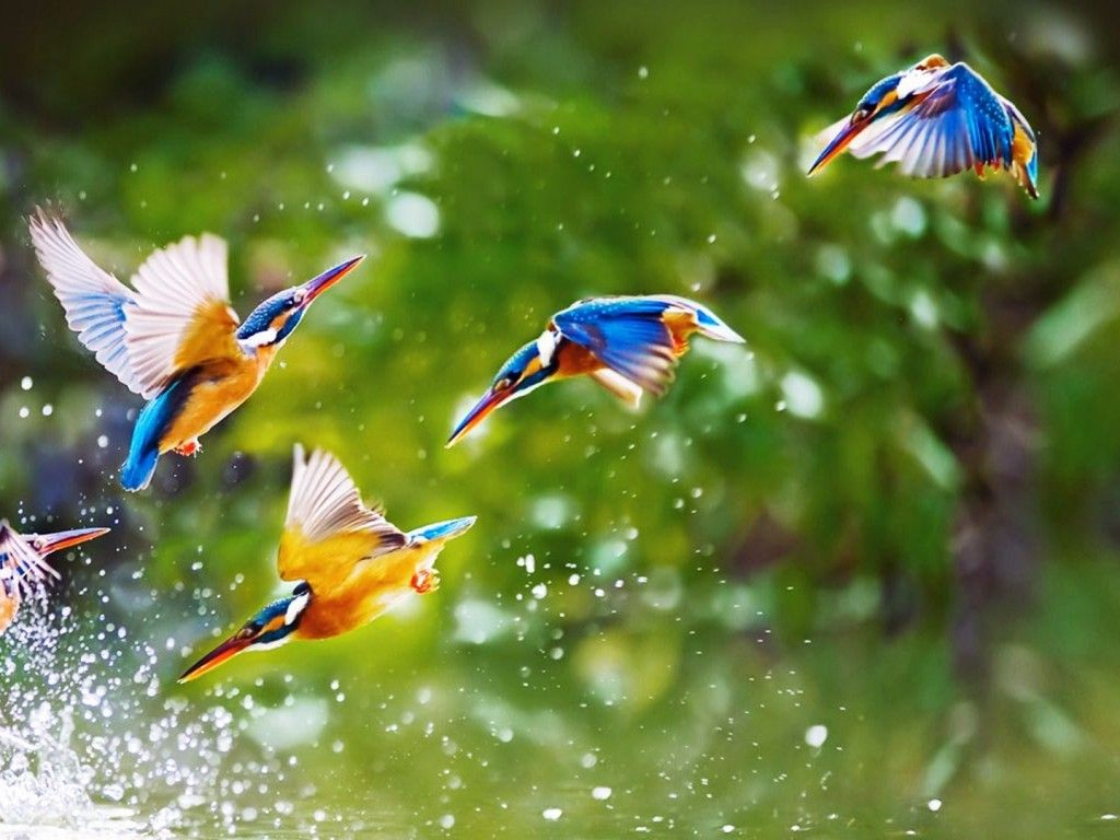 Flying Birds HD Wallpapers | nature | Beautiful bird ...